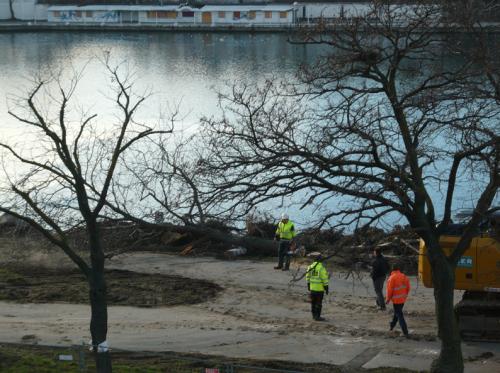 Copa Beach - Baumrodungen - Antworten zum Teil 2